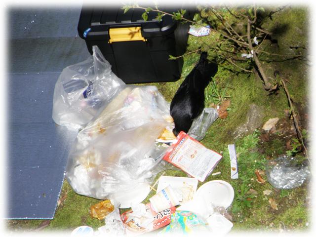 ゴミを漁るカラスさん。